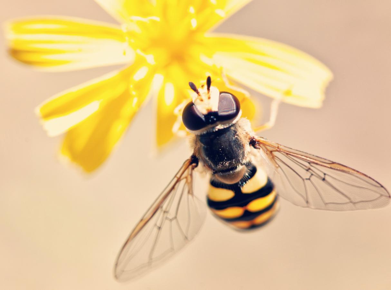 Pszczola i kwiat jako symbol Bumble Naukowo Uczuciowo